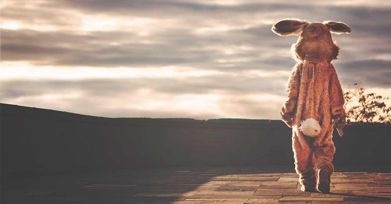 Contemplative Bunny